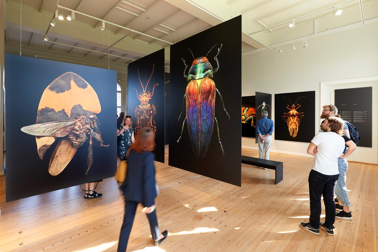 microsculpture the insect portraits of levon biss