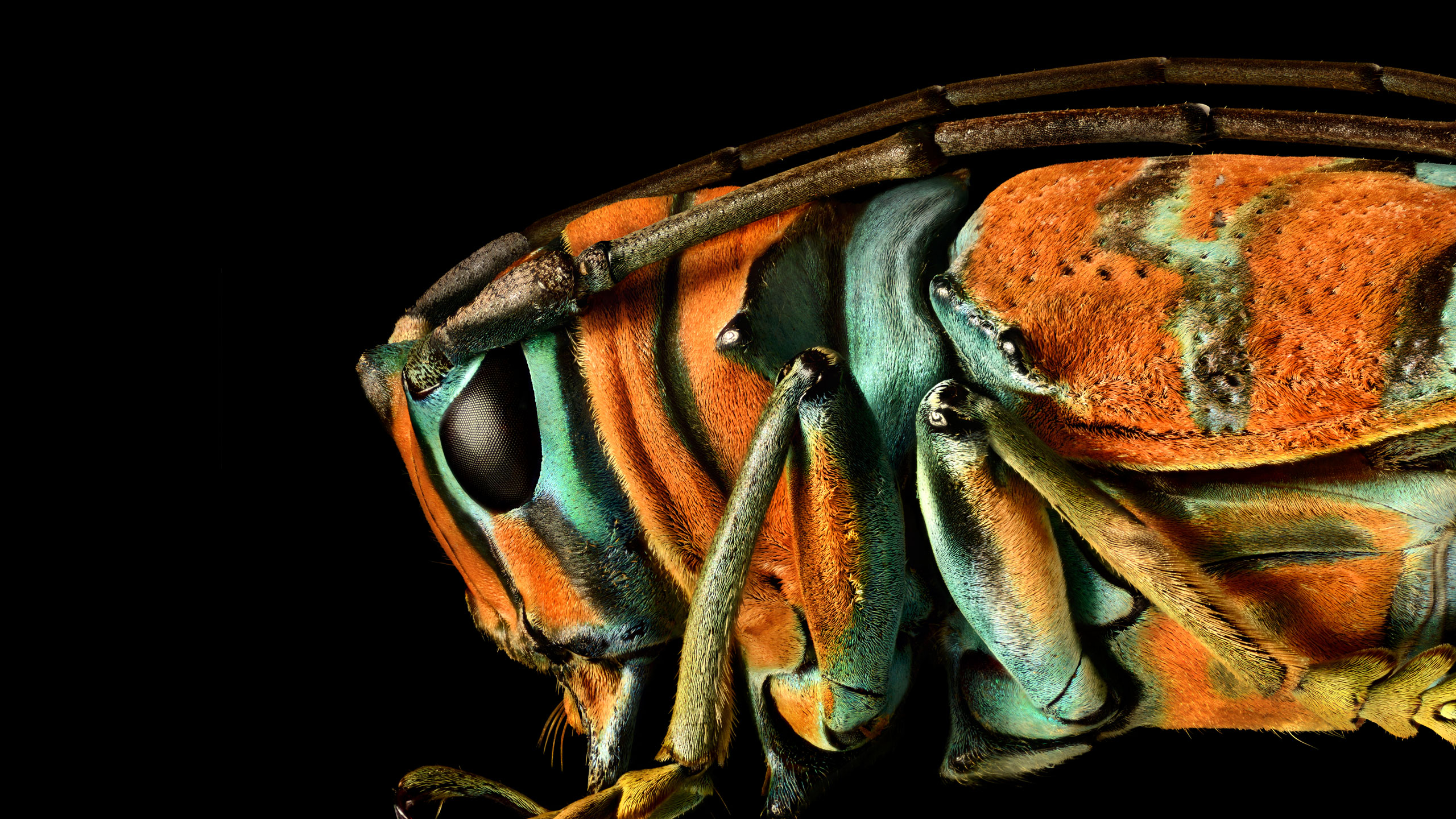 The Insect Portraits of Levon Biss